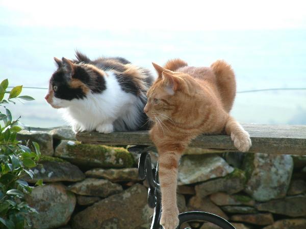 CatsOnTable.jpg
